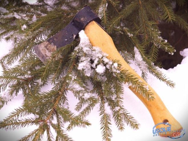Житель Тельмы в преддверии Нового года похитил голубую ель