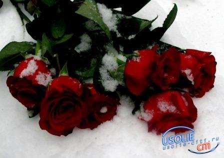 В честь старого нового года. В Усолье розы на морозе
