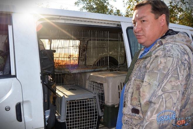 В Усолье едет охотник за собаками и везет с собой летающий шприц