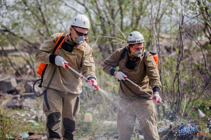 Добровольцы помогут бороться с пожарами в лесах . Усольчане стали в этом пионерами