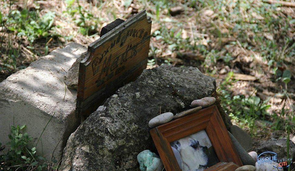 В Усолье обнаружено незаконное кладбище для животных