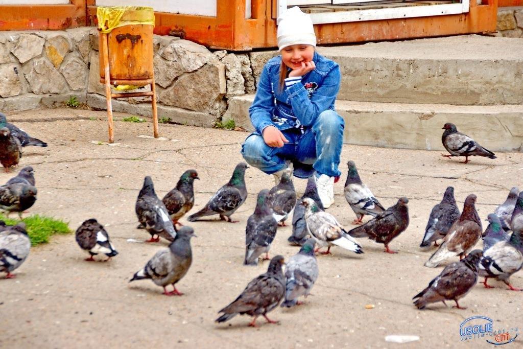 Кормить с рук усольских голубей опасно , возможно, пернатые болеют орнитозом