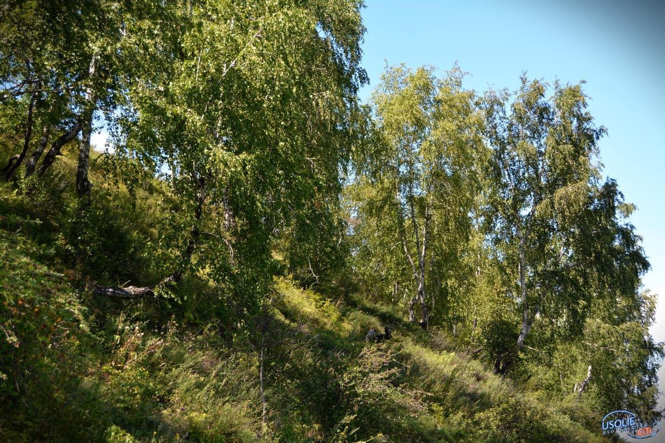 Сохранить лес для будущего поколения усольчан - это не просто слова