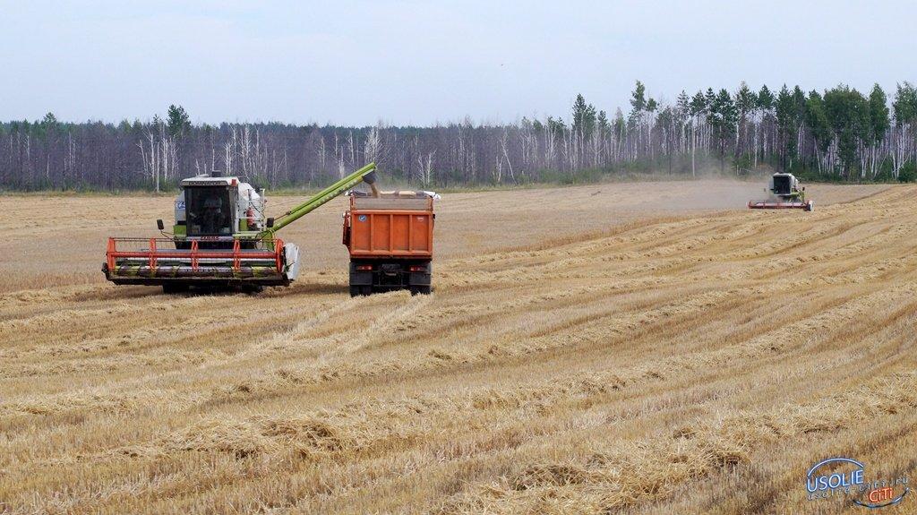 Усольские хозяйства первыми приступили к уборке урожая