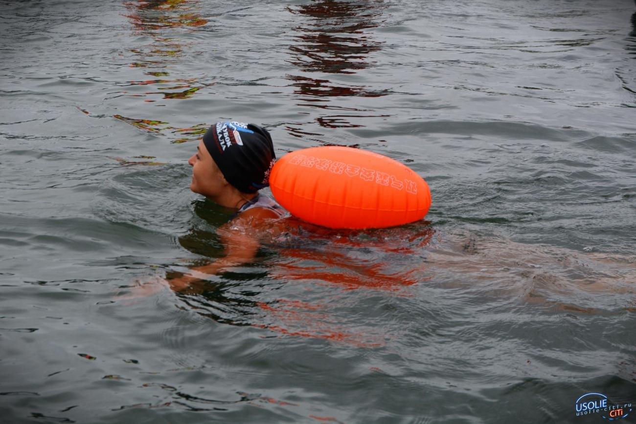 В Усолье приплыли 12 моржей из Иркутска