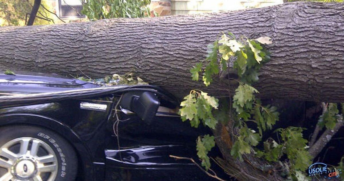 Усольчанка отсудила у управляющей компании 87 тысяч рублей за упавшее на ее машину дерево