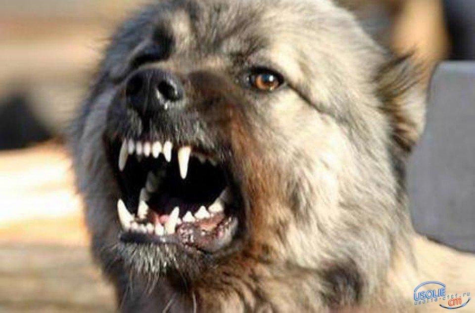 Усольские полицейские застрелили кавказскую овчарку