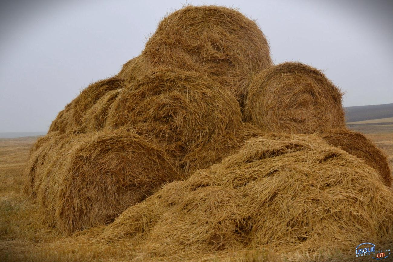 250 тонн сена сгорело на ферме СХПАО