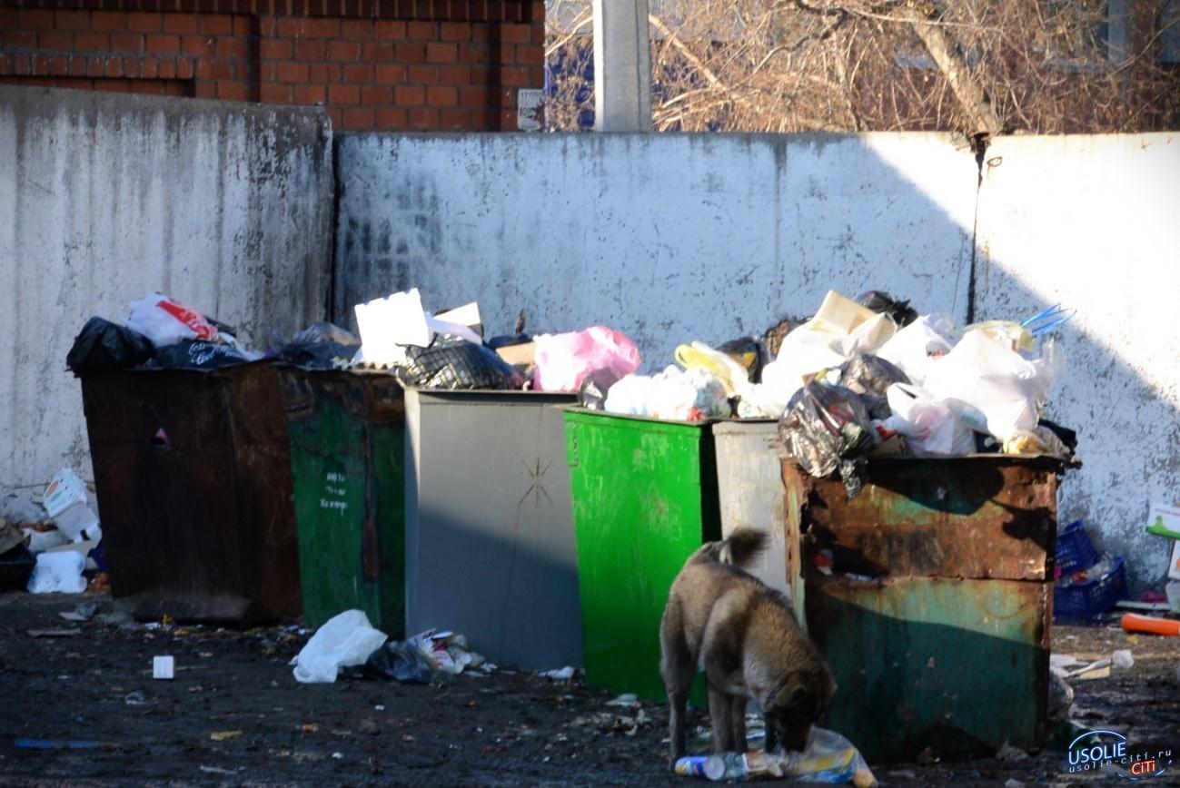 Дополнительную квитанцию ЖКХ получат усольчане. Сколько будем платить за вывоз мусора