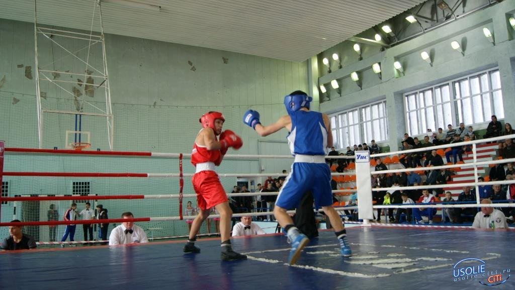 Усольские боксеры поедут на первенство Сибири