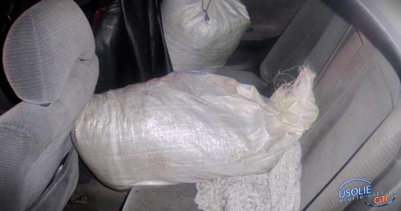В Усолье задержан автомобиль, перевозивший коноплю