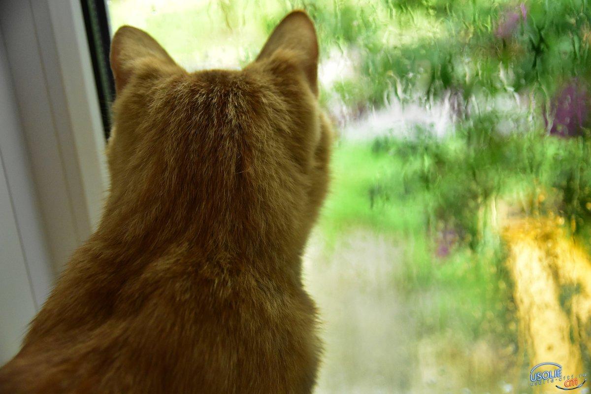 Ливень и дождь. В воскресенье в Усолье испортится погода