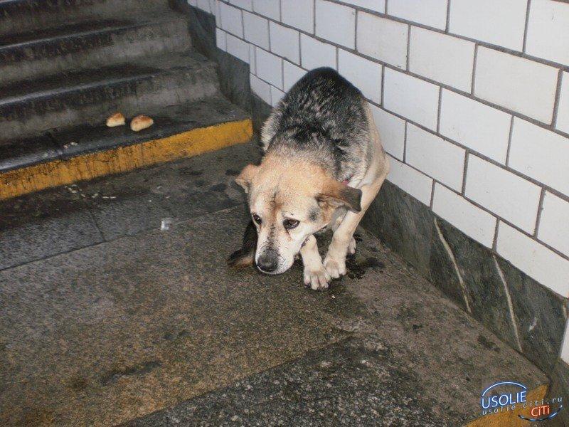 Бесправные и обездоленные: Усольчанин умер, а пес остался на площадке возле закрытой двери
