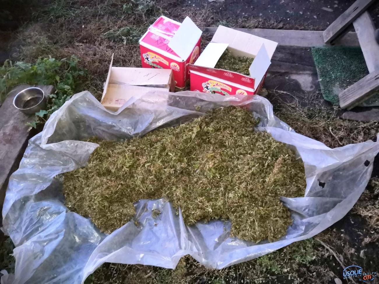 Усольские полицейские отобрали марихуану у жителя района