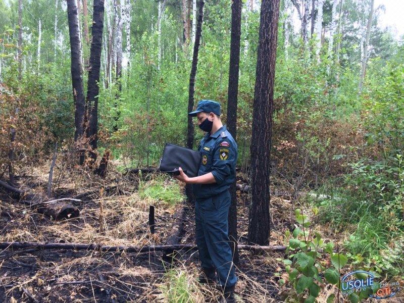 Причины лесных пожаров устанавливает комиссия в Усольском районе