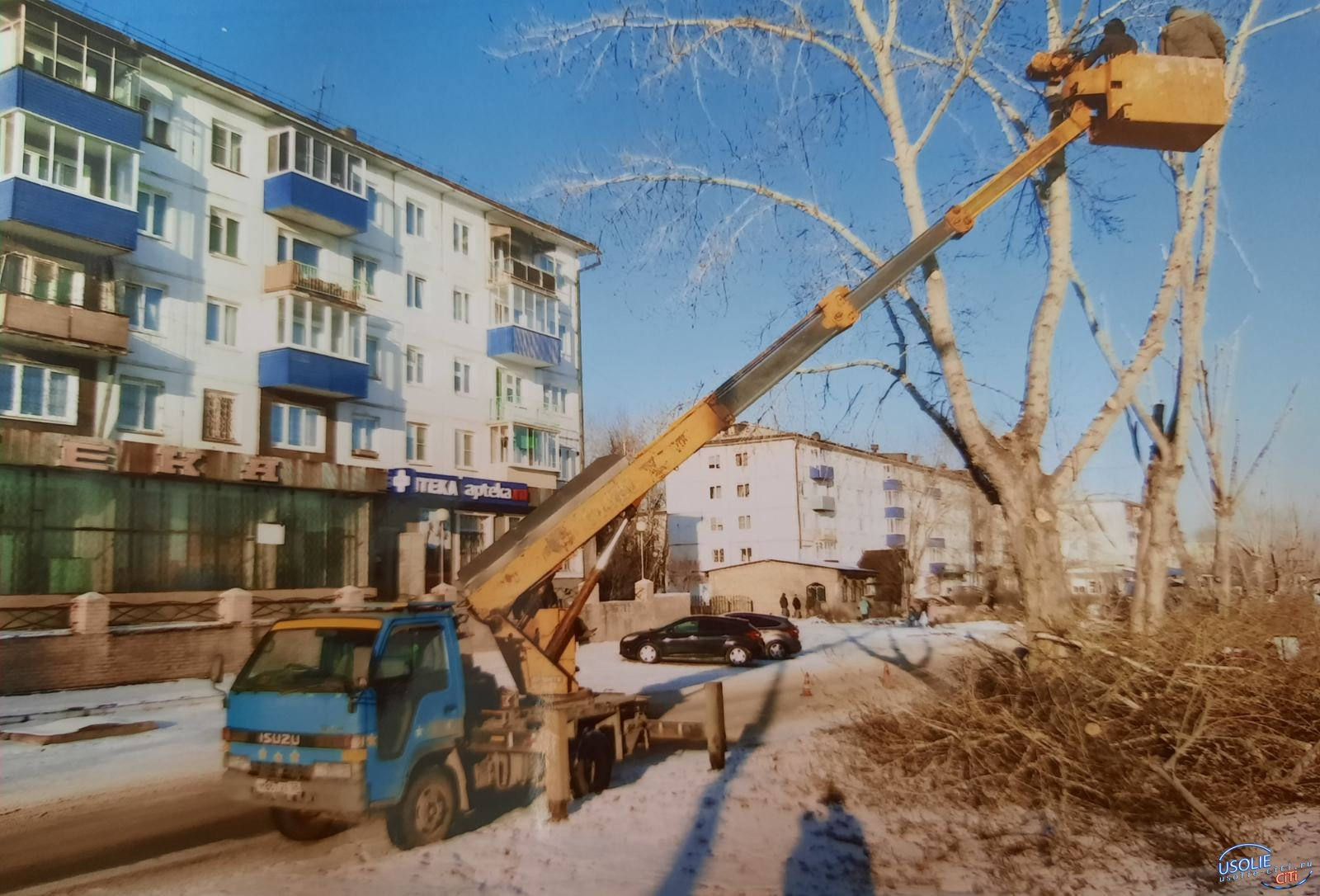 В Усолье началась обрезка деревьев