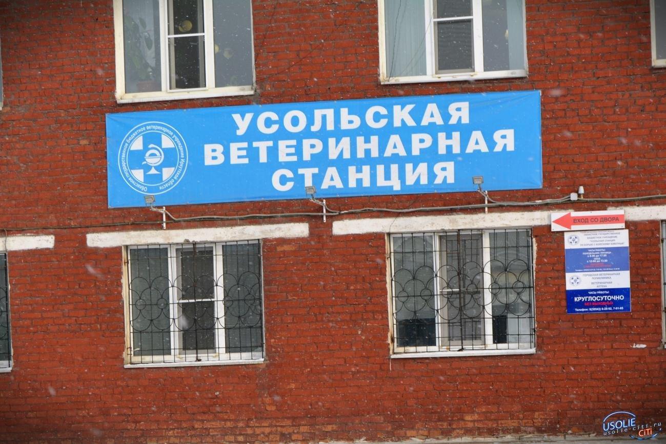 Мэр поможет: Усольчане жалуются на нехватку ветеринарных врачей