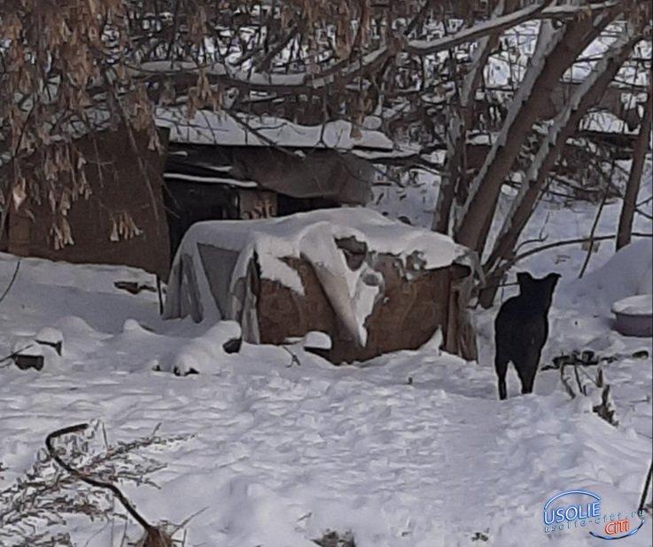 Агрессивное нападение: Бродячие собаки  искусали жителя Усолья