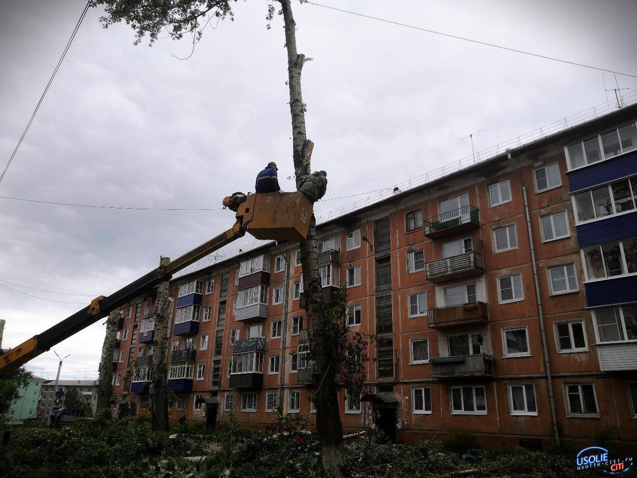 В Усолье началась работа по формовке деревьев