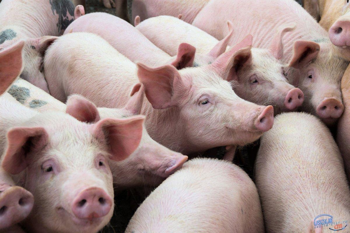 Прокуратура Усолья информирует: Правило изъятия животных