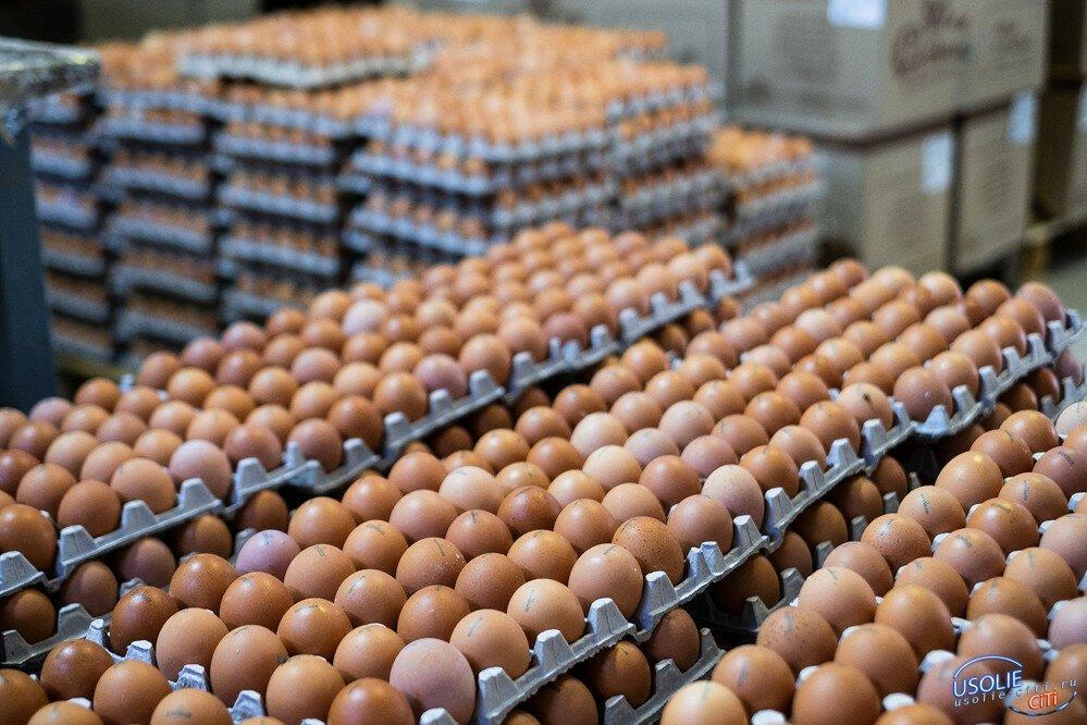 23 тонны мороженого и 1,2 млн яиц экспортировали из Усолья в Монголию