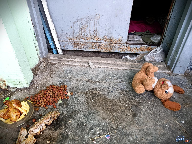 Собаку похитили в Усолье возле ТСЖ
