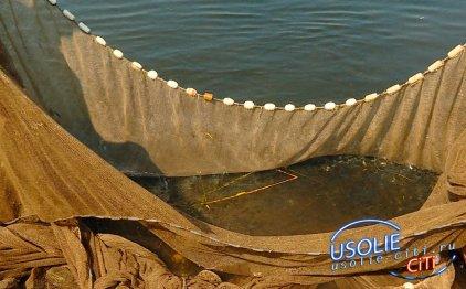 В Усольском районе в реку Белую выпустили 10 тысяч мальков пеляди