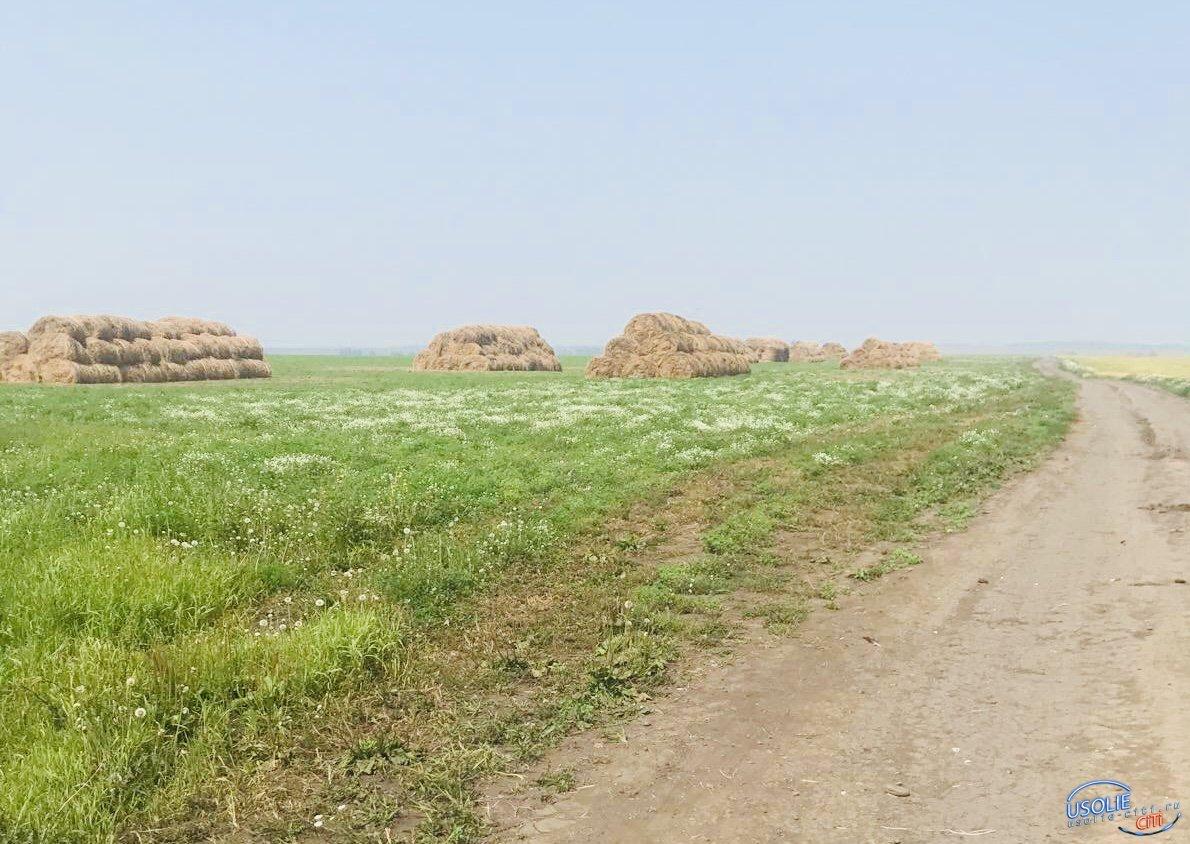 Опережающими темпами идёт заготовка кормов в Усольском районе