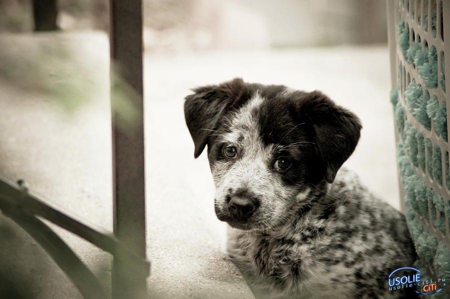 Усолье-проблема: Ковид забирает человека, а кто забирает собаку?