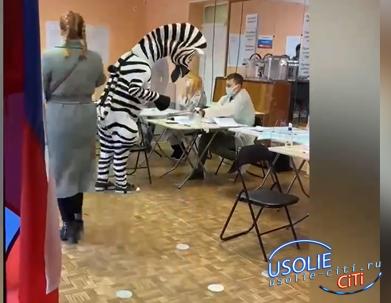 Зебра в Усольском районе пришла проголосовать