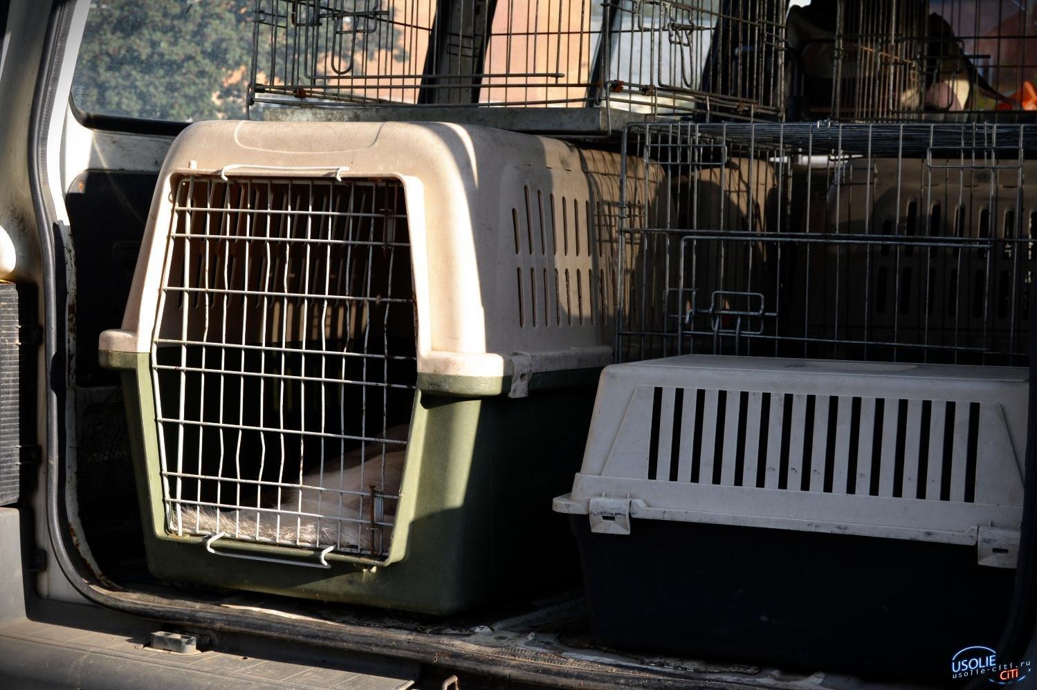 Усольское общество защиты животных выиграло областной грант на создание приюта